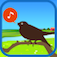 Chirp! Bird Song USA +